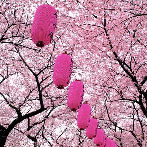 flower_festival01
