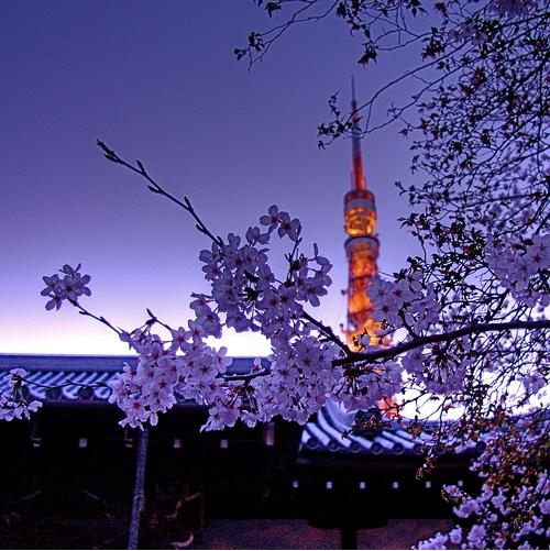 Japan's Flower Festival