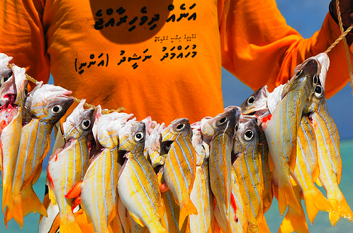 Overfishing is another serious problem my country is facing at the moment. According to a recent Greenpeace report, groupers are getting extinct in the Maldivian waters and fishermen are reporting declining numbers of the fish every year. Sea cucumber have virtually disappeared from the island's waters almost a decade ago.