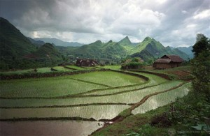 Rice fields in northern Vietnam