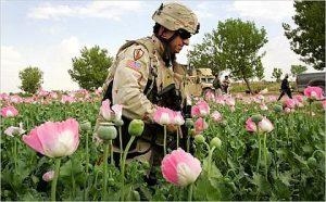 Afghan Opium