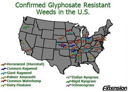 Monsanto Superweeds