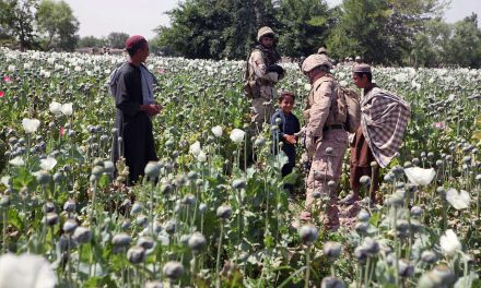 The Drug Trade in Afghanistan: Understanding Motives behind Farmers' Decision to Cultivate Opium Poppies
