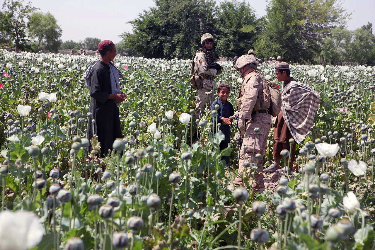 the drug trade in understanding motives behind the drug trade in understanding motives behind farmers decision to cultivate opium poppies foreign policy journal