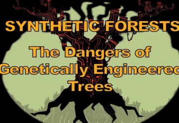 Synthetic Forests: The Dangers of Genetically Engineered Trees